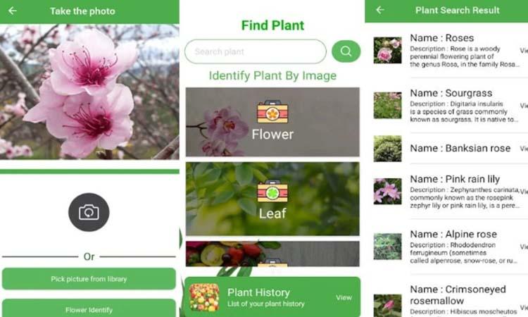 FindPlant